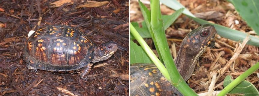 same turtle